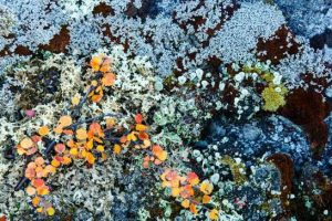 lichen-4LEAD.jpg.653x0_q80_crop-smart